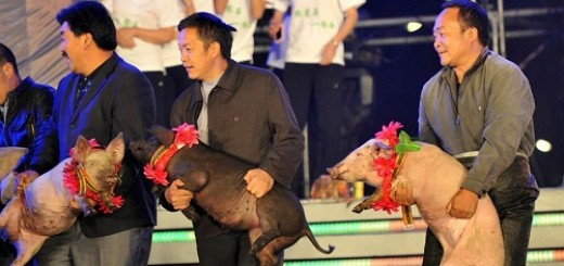 Chen Guangbiao donate pigs and sheep to farmers 11092601