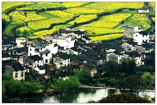rape flower in Wuyuan Jiangxi