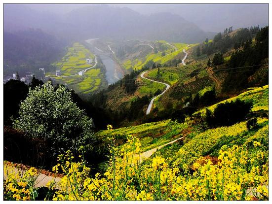 top 10 places to enjoy rape flowers in china