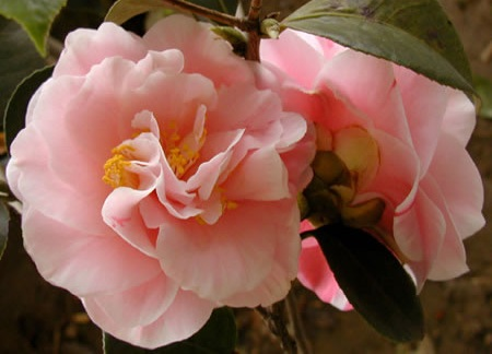 Top 10 Flowers In Chinese Culture