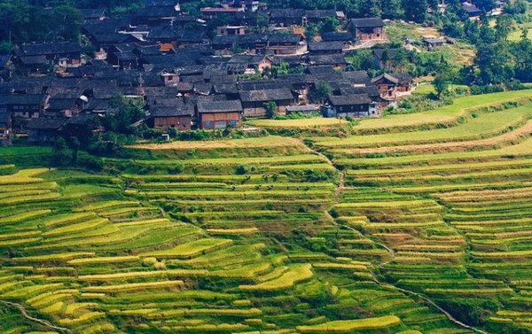 Gaoyao Terraces