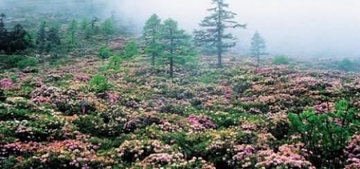 Baima Snow Mountain Forest