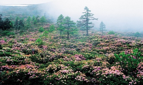 Baima Snow Mountain Forest