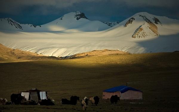 tibet population density