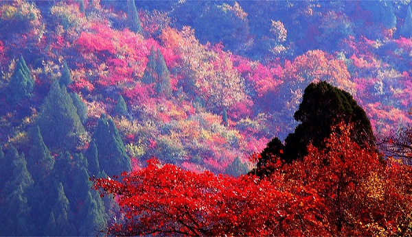 fragrance hill