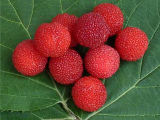 10 Fruits You Should Try in China