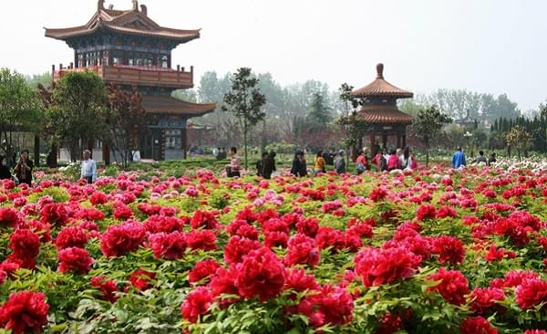 Luoyang Peony Festival