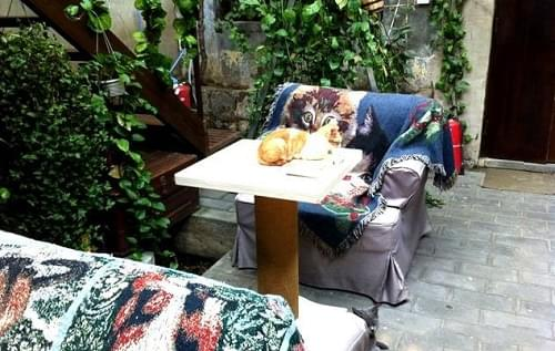 Cat café, Wudaoying Hutong