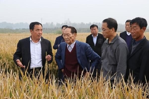 Chinese Agriculture - Super Hybrid Rice